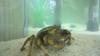 Meerwasser-Aquarium Bensersiel