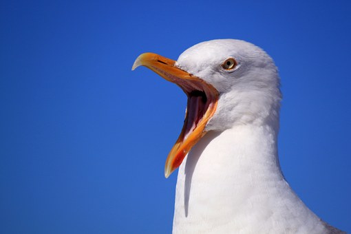 seagull-249638__340